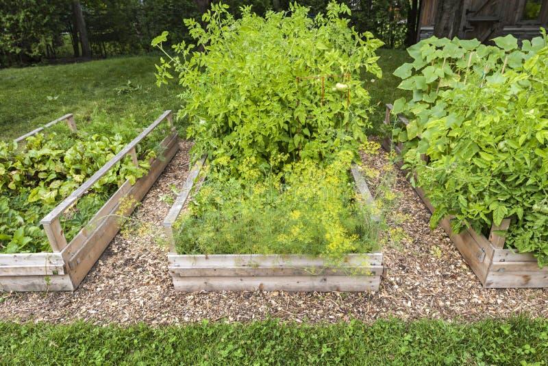 被上升的箱子的菜园 库存照片