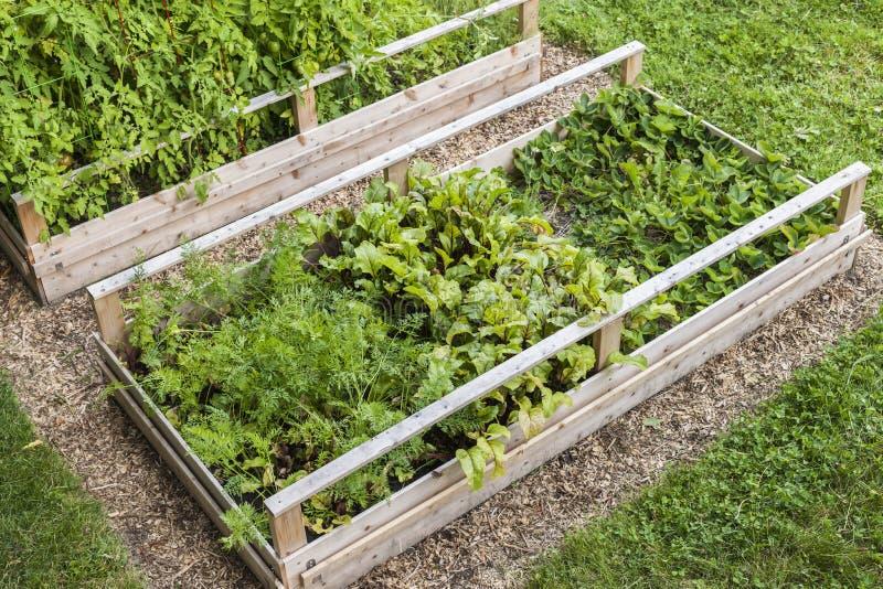 被上升的箱子的菜园 免版税库存照片