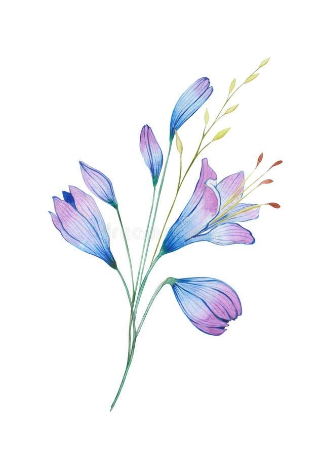 被传统化的水彩蓝色花,爱情花花束 向量例证
