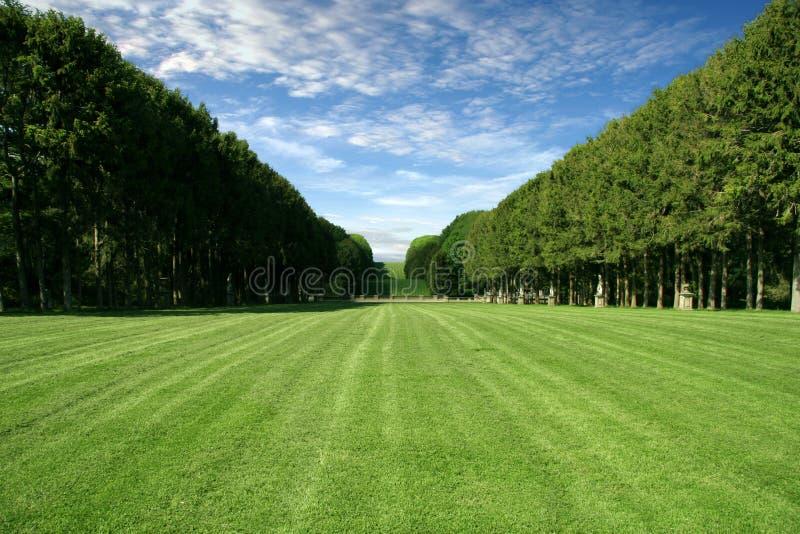被修剪的域绿色大草坪 库存图片