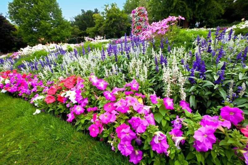 被修剪的杜娟花五颜六色的花园 免版税库存照片