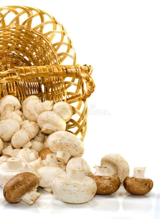 被倒置的篮子vithï ¿ ½在白色背景采蘑菇 图库摄影
