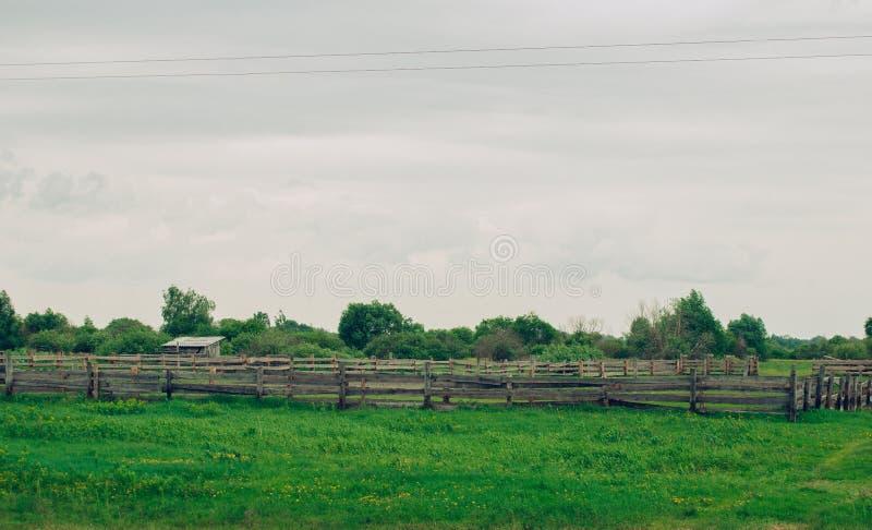被充斥的树和草甸,在白俄罗斯的狂放的本质的背景的木大厦, 免版税库存图片