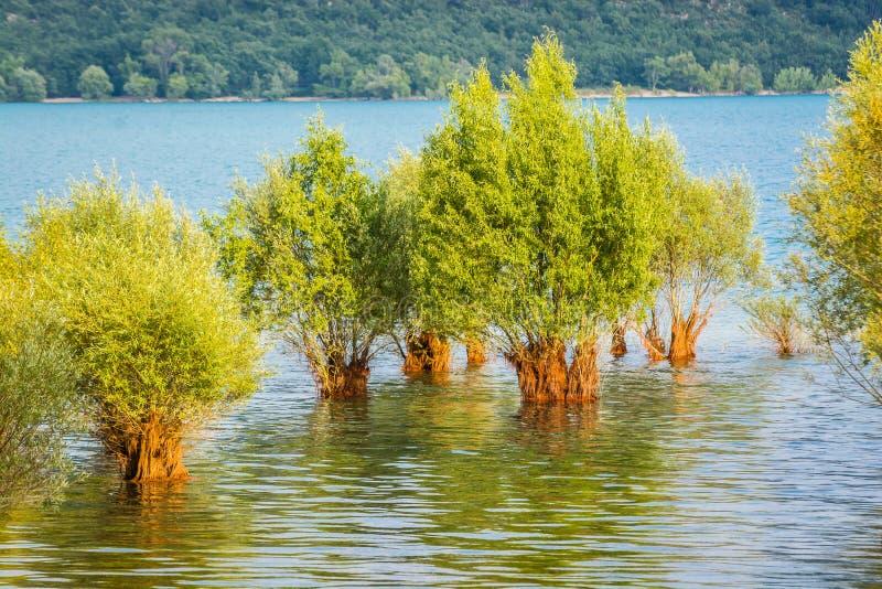 被充斥的树在湖Sainte克鲁瓦在村庄Sainte克鲁瓦du维尔东,法国 库存图片