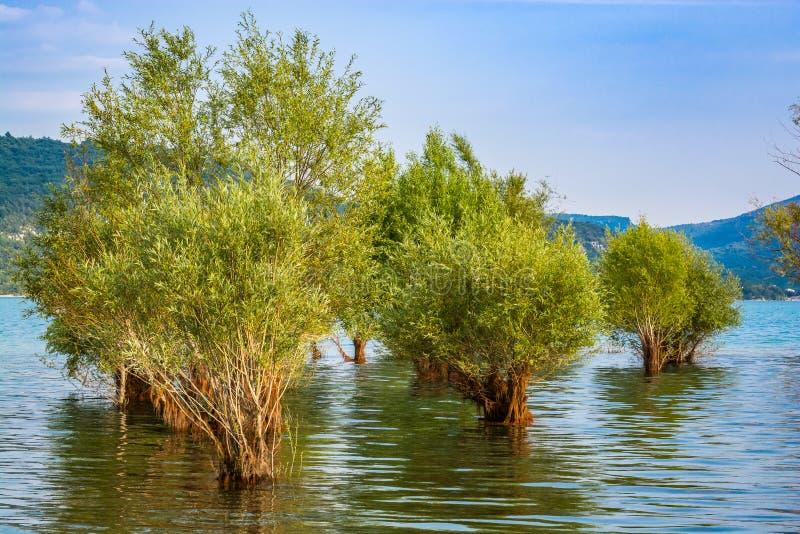 被充斥的树在湖Sainte克鲁瓦在村庄Sainte克鲁瓦du维尔东,法国 库存照片