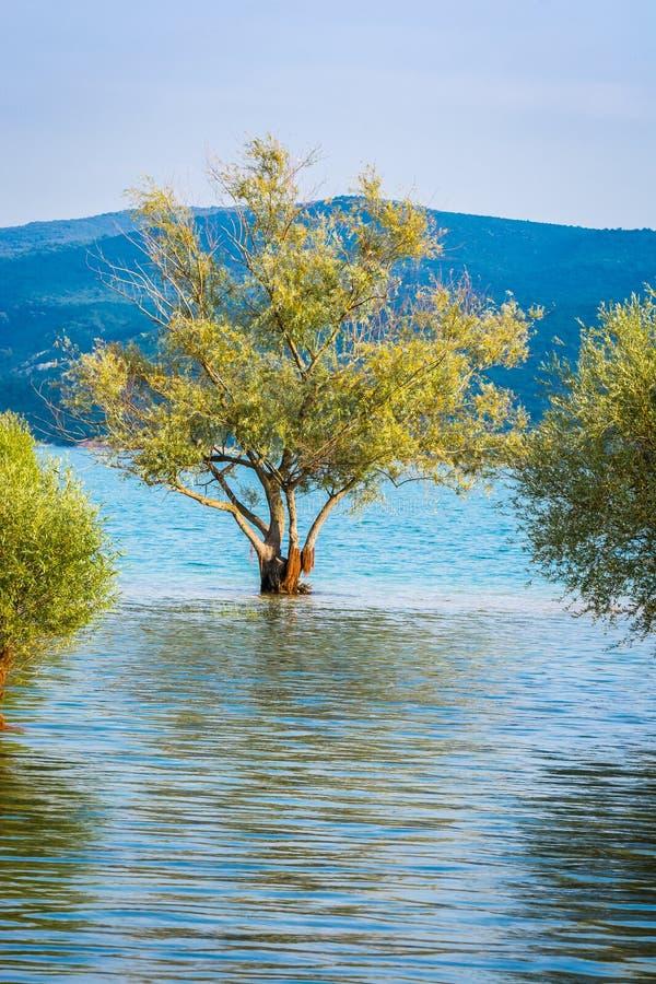 被充斥的树在湖Sainte克鲁瓦在村庄Sainte克鲁瓦du维尔东,法国 图库摄影