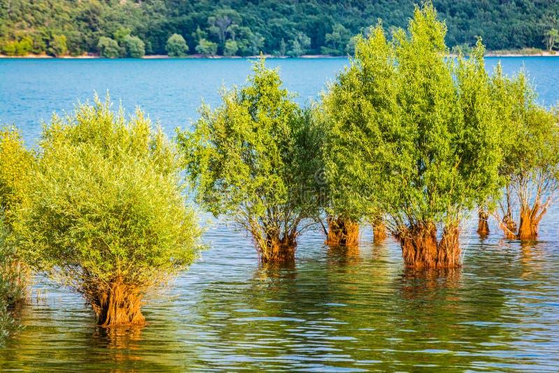 被充斥的树在湖Sainte克鲁瓦在村庄Sainte克鲁瓦du维尔东,法国 免版税库存照片