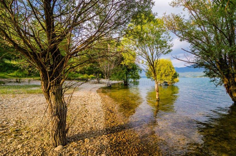 被充斥的树在湖Sainte克鲁瓦在村庄Sainte克鲁瓦du维尔东,法国 免版税库存图片