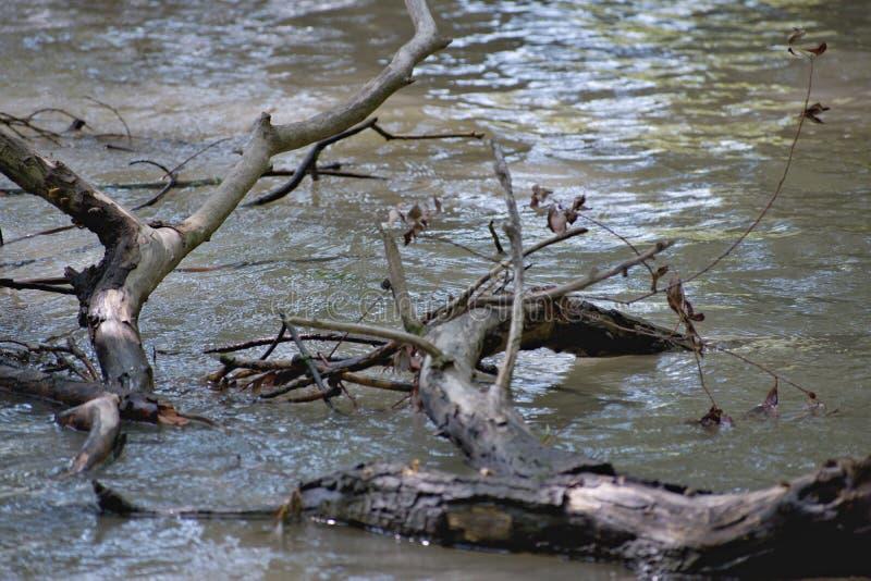 被充斥的森林在斯洛伐克 免版税库存照片