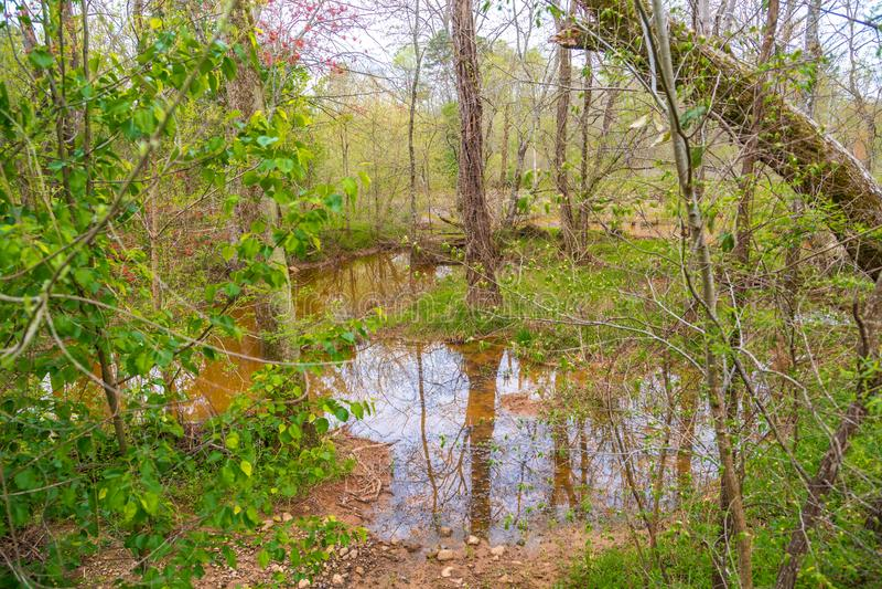 被充斥的沼泽地在森林里 库存照片