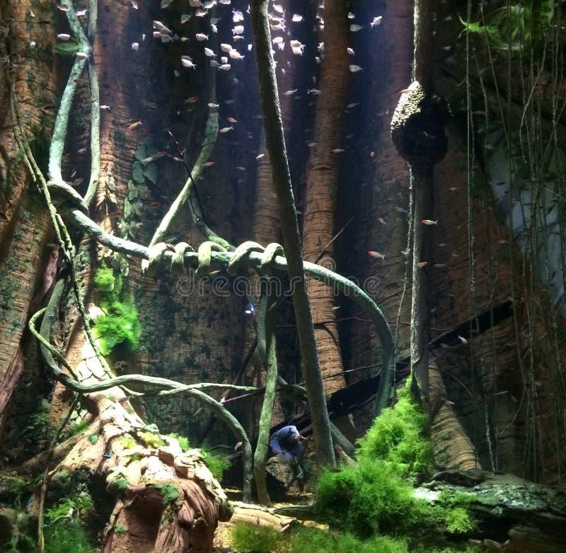 被充斥的热带森林 库存图片