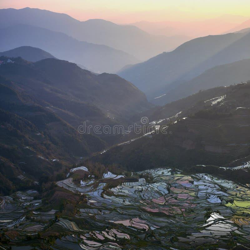 被充斥的米领域在中国南方 免版税库存图片