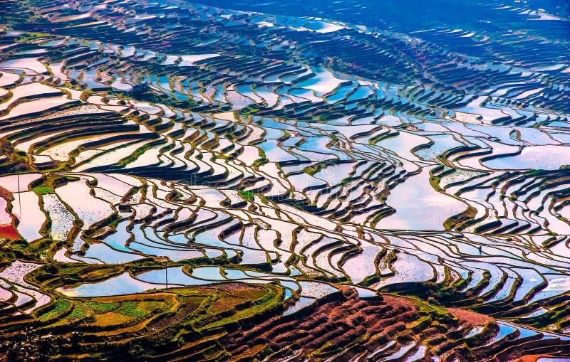 被充斥的米领域在中国南方 免版税库存照片