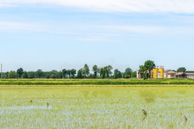 被充斥的米领域, Lomellina (意大利) 免版税库存图片