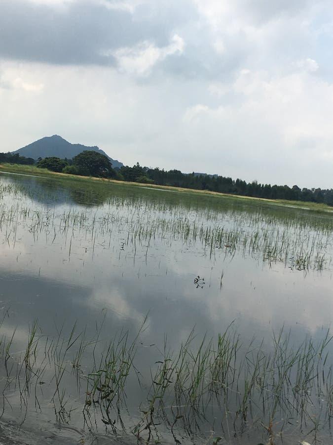 水被充斥的米领域 图库摄影