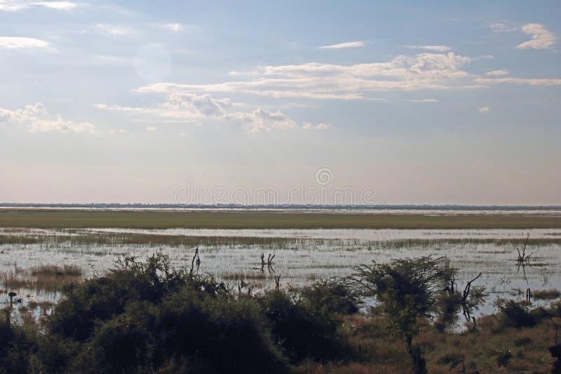 被充斥的CHOBE河的浩大的浩瀚 免版税库存图片