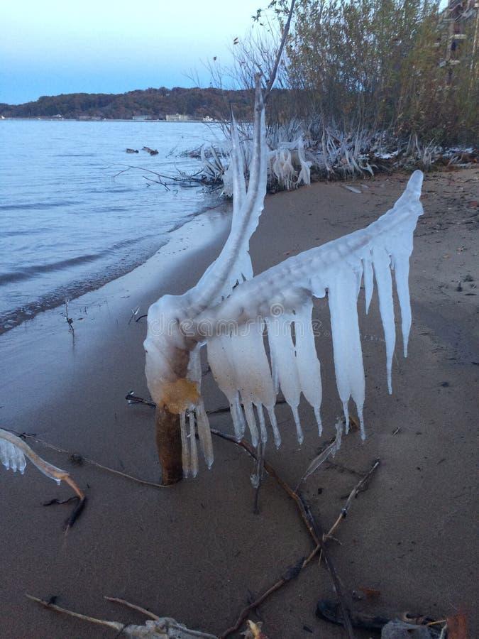被冰的分行 图库摄影