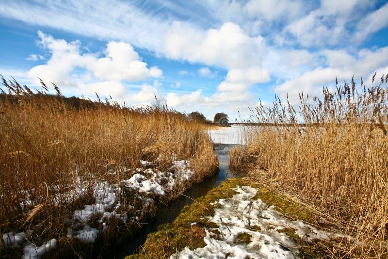 被冰的湖在丹麦 免版税图库摄影