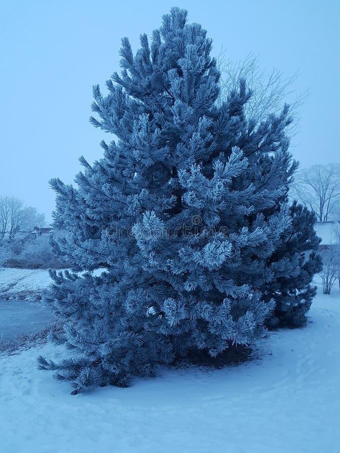 被冰的结构树 库存照片