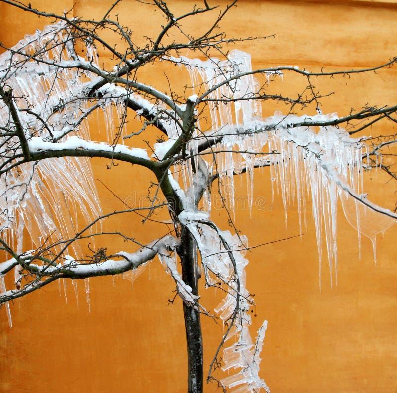 被冰的结构树 免版税图库摄影