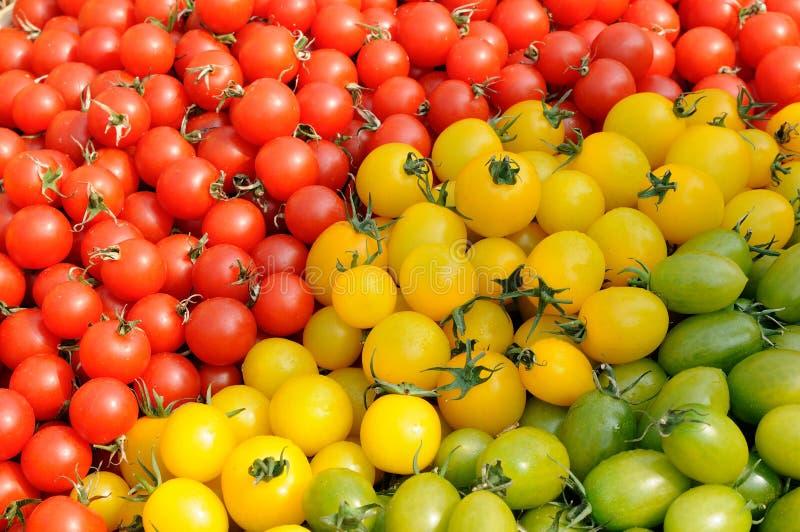 被分类的五颜六色的蕃茄 库存图片