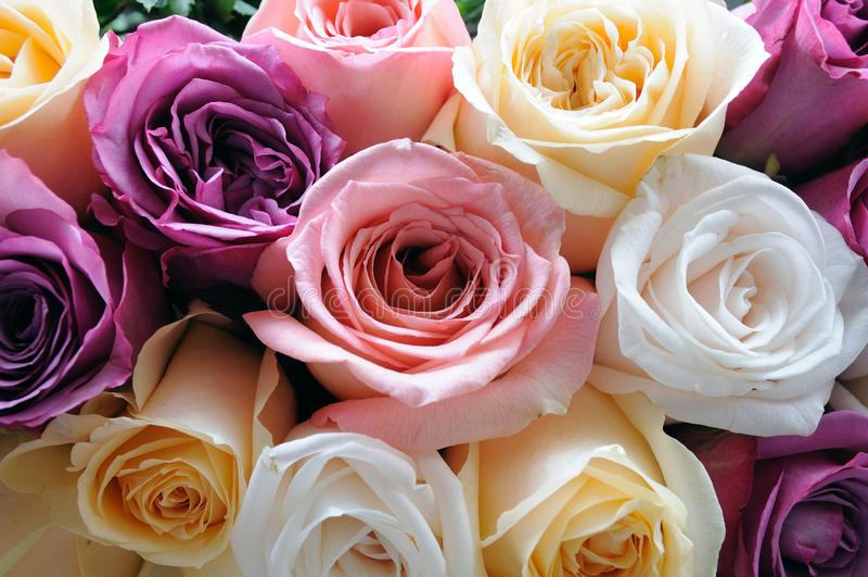 被分类的颜色玫瑰 库存照片