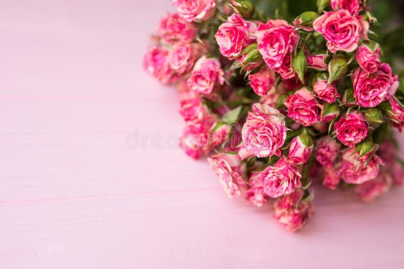 被分类的玫瑰头 在桃红色背景的各种各样的软的玫瑰 免版税库存图片