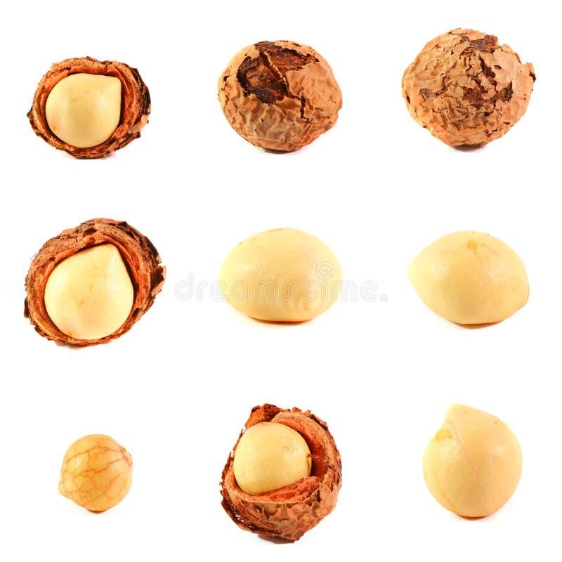 被分类的Callophylum果子和种子 库存图片