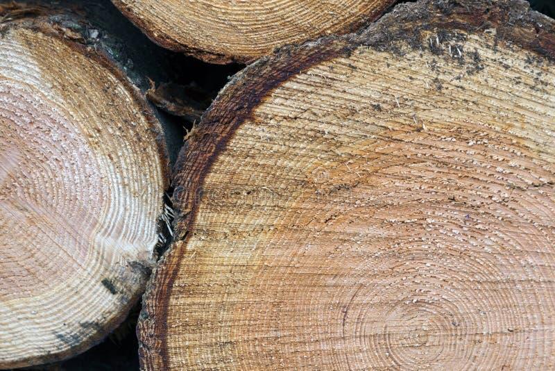 被切开的云杉的树干特写镜头  库存图片