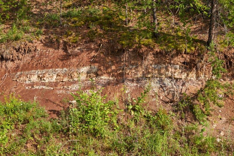 被切开的土壤在森林里 免版税库存照片