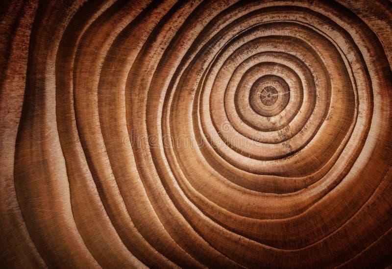 被切开的树干木落叶松属纹理  免版税库存照片