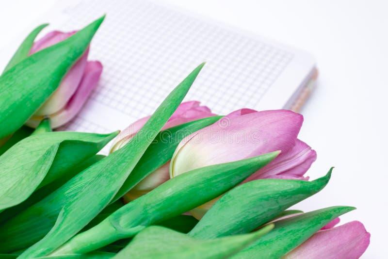 被切开的桃红色淡紫色郁金香花束与一个笔记本的在白色背景关闭 免版税库存照片