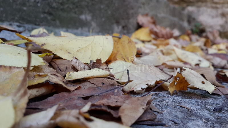 被到达的秋天有 免版税库存照片