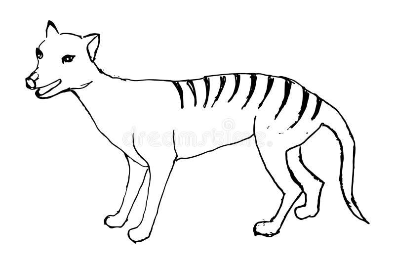 被刻记的塔斯马尼亚的狼袋狼属狗头畸形,手拉的传染媒介例证 向量例证