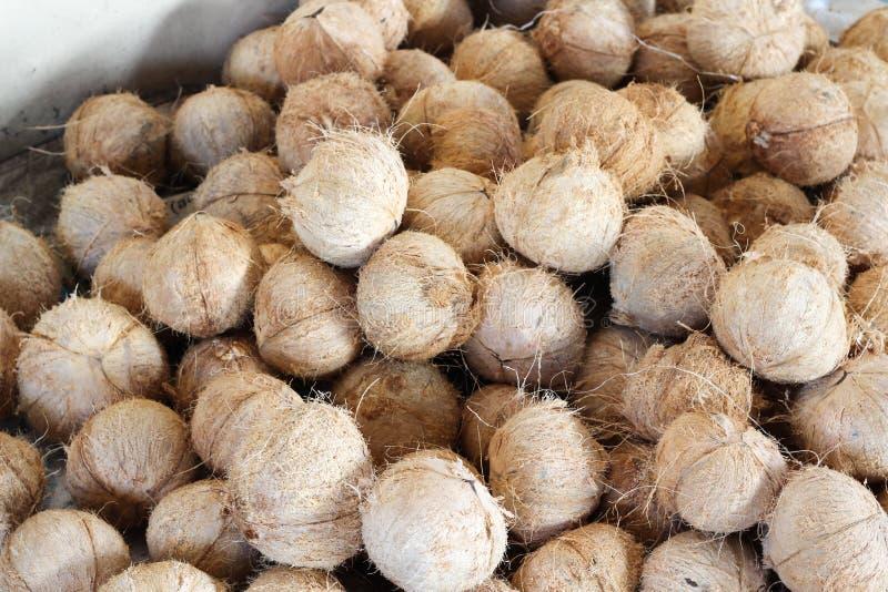 被剥皮的椰子 免版税库存图片