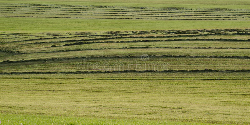 被割的干草 库存图片