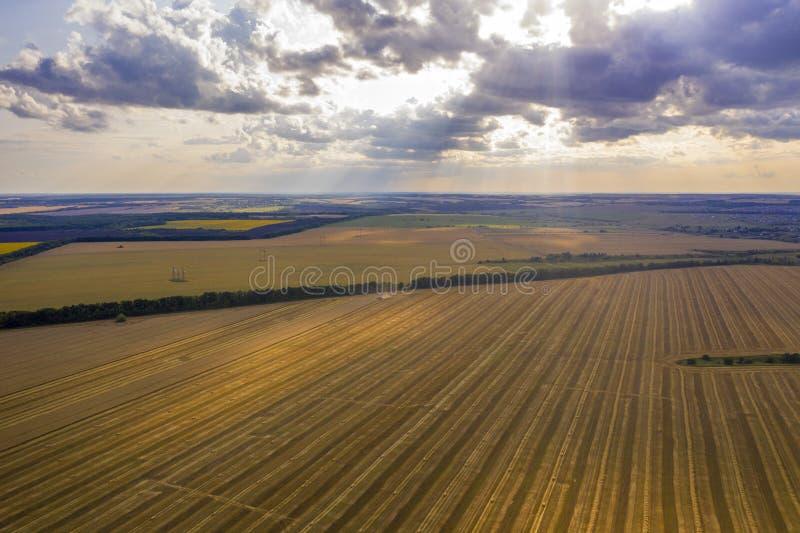 被割的麦子进入距离的,从quadcopter的看法的领域 库存照片