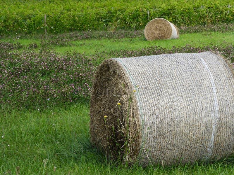 被包裹的圆的干草捆、三叶草和葡萄园葡萄 库存图片