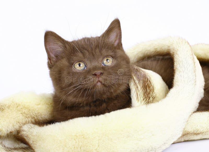 被包裹的毛皮小猫 免版税库存图片
