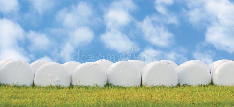 被包裹的被堆积的青贮大包荡桨,隔绝围绕白色塑料胶膜干草卷,窖藏半干草饲料堆行全景,水平的草原 免版税库存照片
