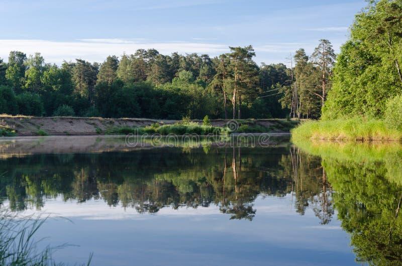 被反射的森林 库存图片
