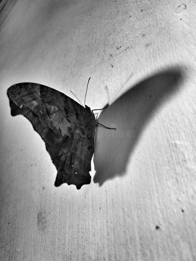 被反映的蝴蝶黑白照片 免版税库存照片