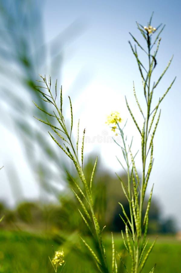 被召集的植物有朦胧的背景 免版税库存图片