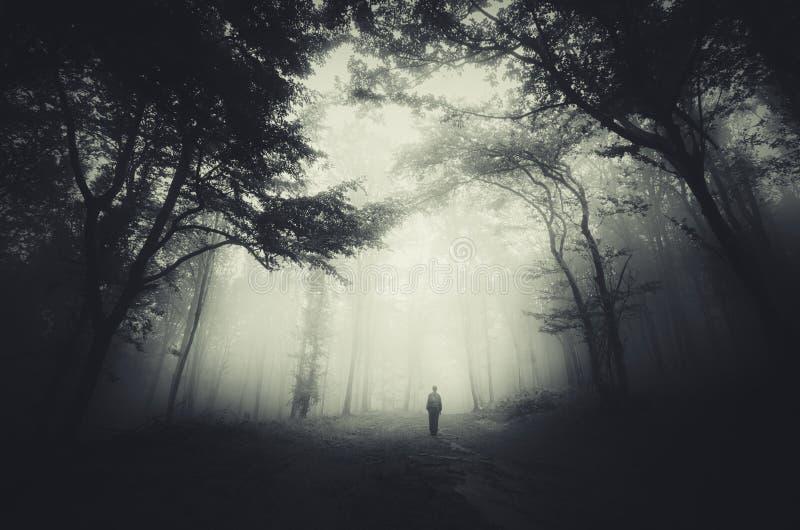 被困扰的森林 库存照片
