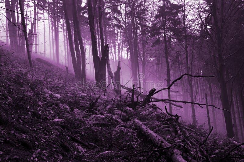 被困扰的鬼的森林 库存照片