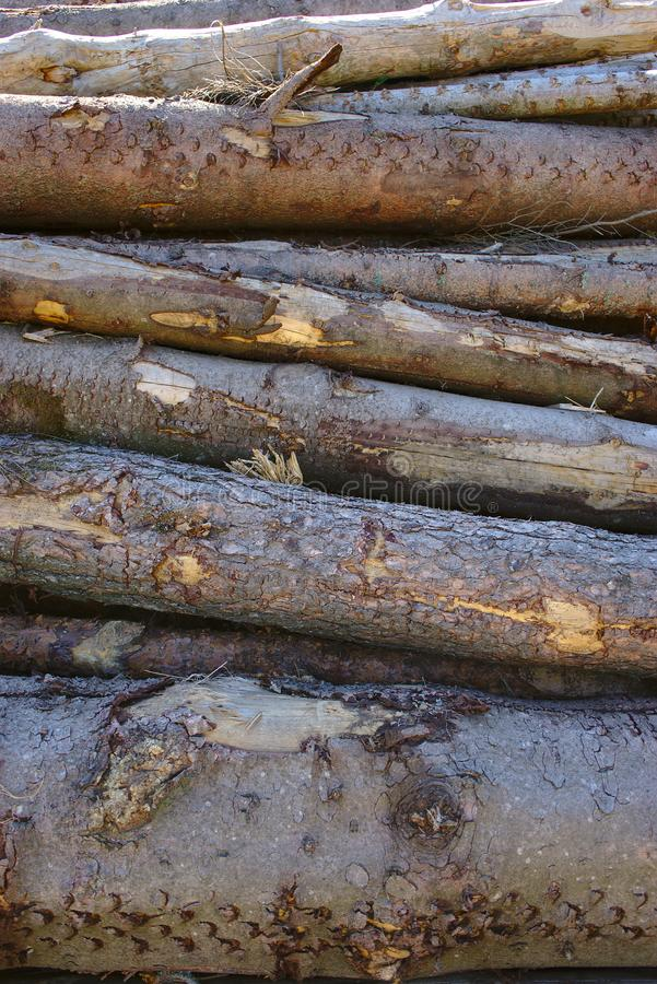 被堆积的树干,吠声纹理 库存照片