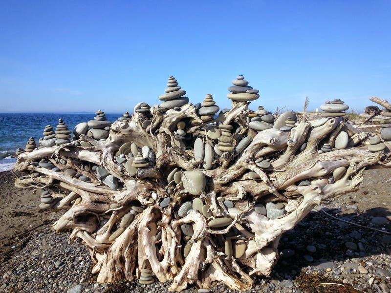 被堆积的石头Dungeness唾液树桩  库存照片