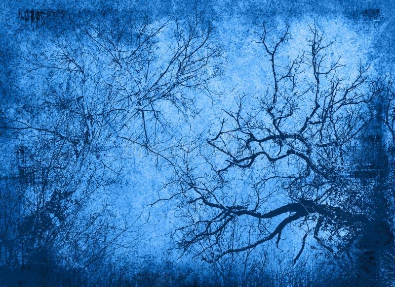 被塑造的分行使老结构树环境美化 皇族释放例证