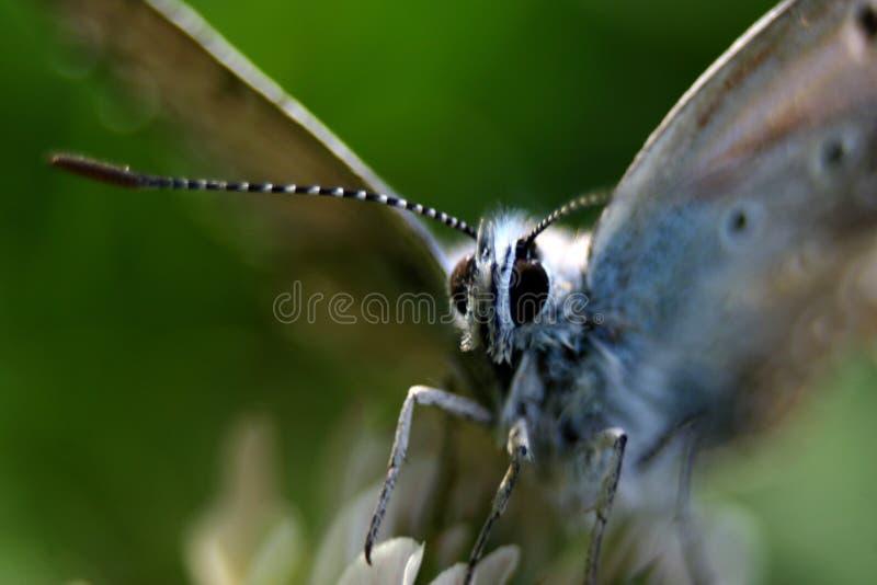 被夺取的蝴蝶非常紧密 库存图片