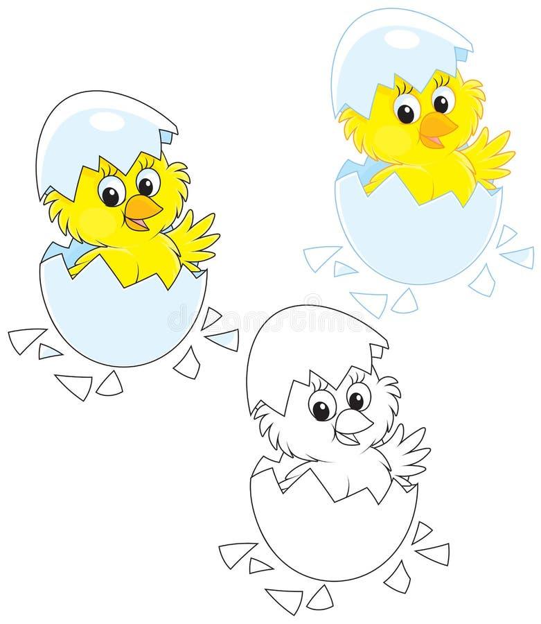 被孵化的小鸡 向量例证